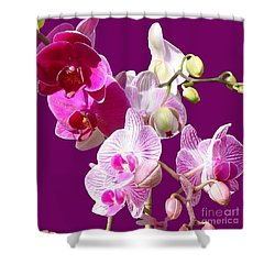 Orchids For Spring Shower Curtain