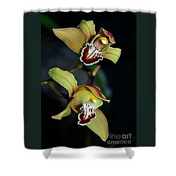 Orchids In The Evening Shower Curtain by Kaye Menner