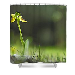 Orchids In The Forest Shower Curtain by Guido Montanes Castillo