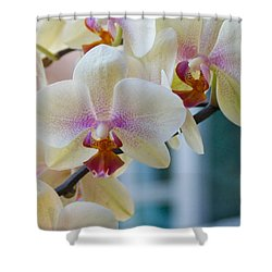 Orchids In The Morning Light Shower Curtain