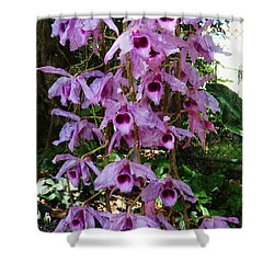 Orchids In The Spring Shower Curtain