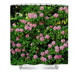 Oregon Azaleas Shower Curtain by Ed  Riche