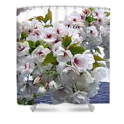 Oregon Cherry Blossoms Shower Curtain