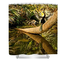 Oriental Darter Anhinga Melanogaster Shower Curtain by Panoramic Images