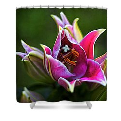 Oriental Day Lily Shower Curtain