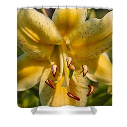 Oriental Lily Shower Curtain by Omaste Witkowski