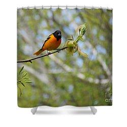 Oriole Shower Curtain by Randi Shenkman