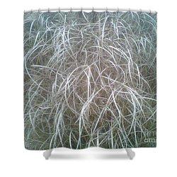 Ornamental Grasses 1 Shower Curtain