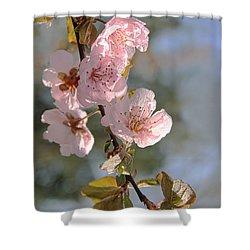 Ornamental Plum Tree Pink Flower Blossoms Shower Curtain by Jennie Marie Schell