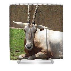 Oryx Shower Curtain by DejaVu Designs