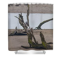 Shower Curtain featuring the photograph Ospray With Fish by Brian Williamson