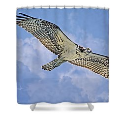 Osprey 91711 Shower Curtain by Deborah Benoit