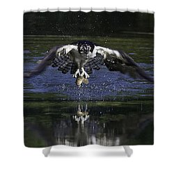 Osprey Bird Of Prey Shower Curtain by David Lester