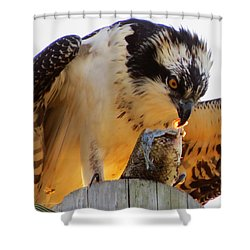 Shower Curtain featuring the photograph Osprey Breakfast by Dianne Cowen