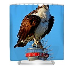 Shower Curtain featuring the photograph Osprey Close-up On Water Navigation Aid by Jeff at JSJ Photography