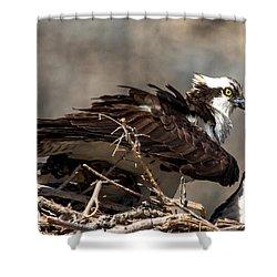 Osprey Family Huddle Shower Curtain by John Daly