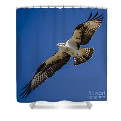 Osprey In Flight Shower Curtain by Dale Powell