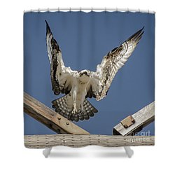 Osprey Landing Shower Curtain by Dale Powell
