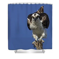 Osprey Photo Shower Curtain