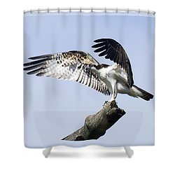 Osprey Pride 2 Shower Curtain