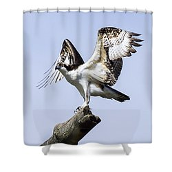 Osprey Pride 6 Shower Curtain