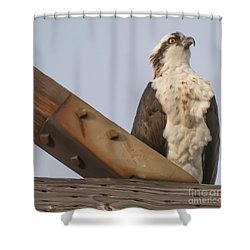 Osprey -seahawk Shower Curtain by Dale Powell