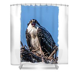 Osprey Surprise Party Card Shower Curtain by Edward Fielding