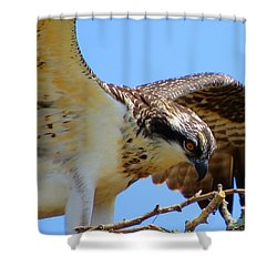 Shower Curtain featuring the photograph Osprey Youth by Dianne Cowen