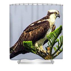 Osprey Shower Curtain by Zina Stromberg