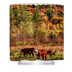 Shower Curtain featuring the photograph Cow Complaining About Much by Jeff Folger
