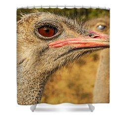 Ostrich Closeup Shower Curtain by Jess Kraft