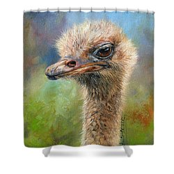 Ostrich Shower Curtain by David Stribbling