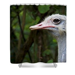 Ostrich Head Shower Curtain by Aged Pixel