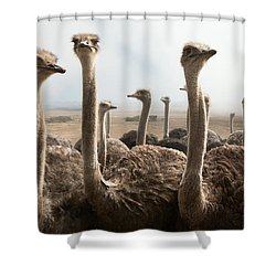 Ostrich Heads Shower Curtain by Johan Swanepoel