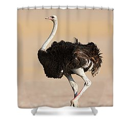 Ostrich Shower Curtain by Johan Swanepoel