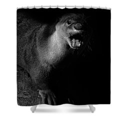 Otter Wars Shower Curtain by Martin Newman