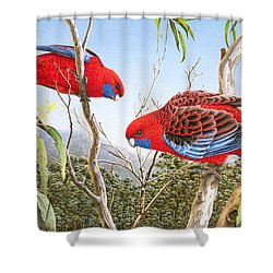 Our Beautiful Home - Crimson Rosellas Shower Curtain