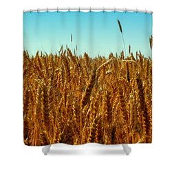 Our Daily Bread Shower Curtain by Karen Wiles