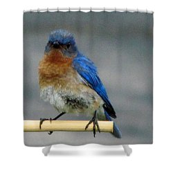Our Own Mad Bluebird Shower Curtain
