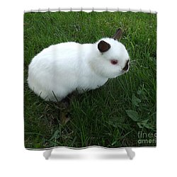 Out For A Stroll Shower Curtain by Sara  Raber