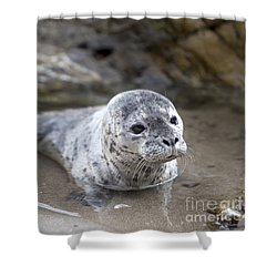 Out For A Swim Shower Curtain by David Millenheft