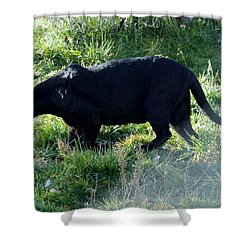 Out Of Africa  Black Panther Shower Curtain