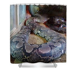 Out Of Africa  Black Snake Shower Curtain