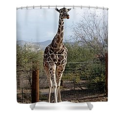 Out Of Africa  Giraffe 1 Shower Curtain