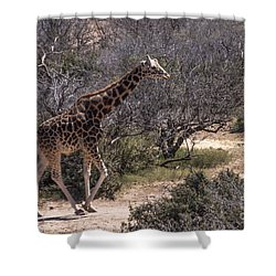 Out Of Africa Giraffe Shower Curtain by Janice Rae Pariza