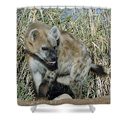 Out Of Africa  Hyena 2 Shower Curtain
