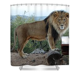 Out Of Africa  Lion 1 Shower Curtain