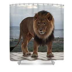 Out Of Africa Lion 3 Shower Curtain