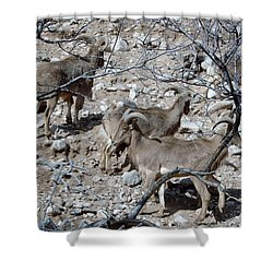 Out Of Africa  Mountain Goats Shower Curtain