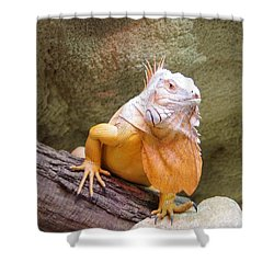 Out Of Africa Orange Lizard 1 Shower Curtain